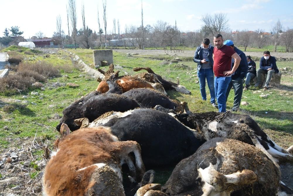 9 büyükbaş hayvanı telef olan vatandaşa büyükşehirden 3 gebe inek