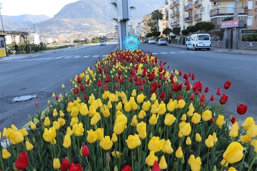 Alanya'da baharın müjdecisi çiçekler açtı