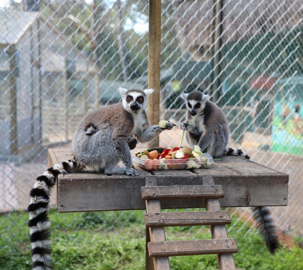 Antalya Hayvanat Bahçesi'nde yeni yavrular